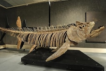A 70-Million-Year-Old Fossil of a Giant Predator Fish, Over Six Metres Long Was Found in Argentina