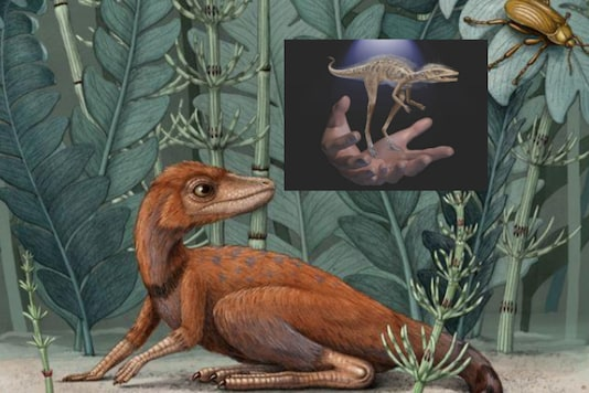 Kongonaphon kely, a newly described reptile near the ancestry of dinosaurs and pterosaurs that lived about 237 million years ago in southwestern Madagascar, is seen in what would have been its natural environment in the Triassic Period in an undated illustration provided July 6, 2020. Alex Boersma/Handout via REUTERS.