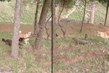 Watch: This Monitor Lizard vs Dogs Fight in Uttarakhand Has an Important Lesson for Us