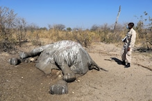 Botswana Gets First Test Results on Elephant Deaths, 281 Carcasses Verified so Far