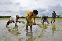 After Vigorous Monsoon Rains, Crop Planting Gathers Pace in India