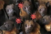 Covid-19 is Killing Humans or Making Them Sick, But How are Bats Immune to Coronavirus?