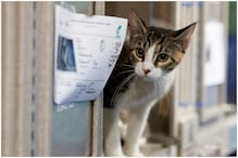 Pet Cat in US Receives Voter Registration Application in Mail, 12 Years after its Death