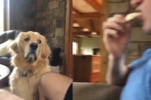 WATCH: Hungry Doggo Staring Quietly as its Human Munches on Will Make Your Heart Melt