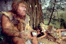 Climate Change Did Not Drive Neanderthals of Western Mediterranean to Extinction