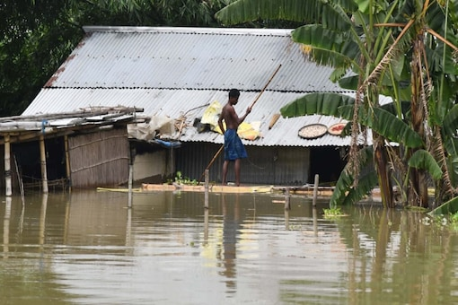 In houses submerged in Morigaon district, humans and cattle take shelter together. (Photo: Biju Boro)