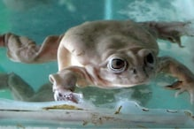 The UN Has Teamed Up With International Scientists to Save a Frog in a Bolivian Lake, Here's Why