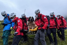 St Bernard Dog H*ckin' Embarrassed as it Took 16 People to Rescue Her from English Mountain