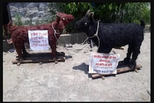 Right-wing Organisation in Bhopal Urges Muslims to Sacrifice Clay Goats on Eid-ul-Adha