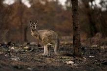 WWF Study Shows Nearly 3 Billion Animals Killed or Displaced in Australian Bushfires of 2019 & 2020