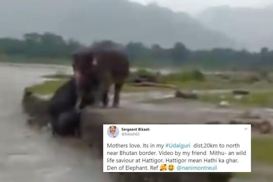 Mama Elephant helping calf to cross the river. Credits: Twitter