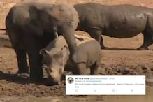 Watch: Elephant's 'Simple and Warm Hug' to a Rhino in This Viral Video will Warm Your Heart