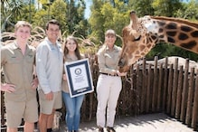 Australia's 'Forest' is World's Tallest Living Giraffe, Makes New Guinness Record