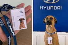 Dog Who Used to Wait Outside Car Showroom Gets His Own ID Card, Swastika Mukherjee Shares Photos