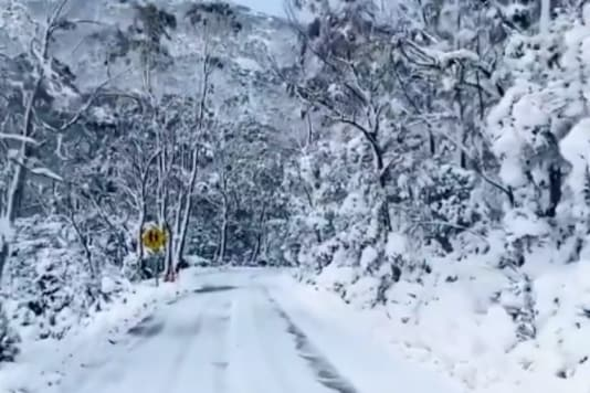 Snowy conditions at Mt Field National Park, Tasmania/@SNOWSEARCH_aus/Twitter