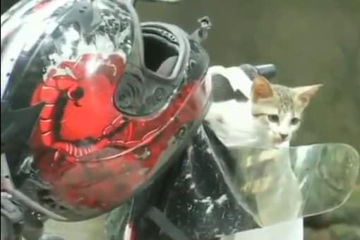 Rescued kitten on the motorbike. Credits: Twitter
