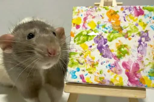 The rat named Gus is beating many human artists with his special paintings   Image credit: Twitter