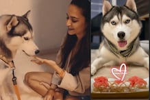 Kriti Kharbanda Bakes Birthday Cake for Pulkit Samrat's Pet Husky Drogo