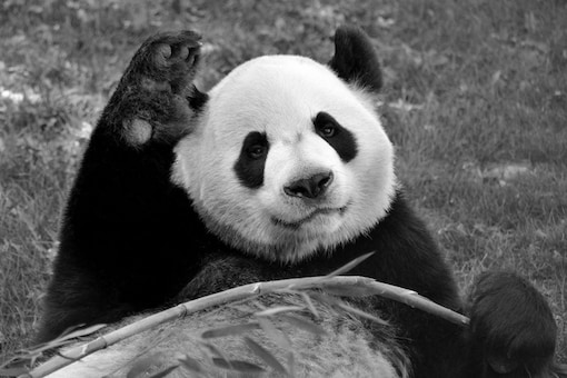 Image Credits: Calgary Zoo/Facebook.