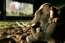 World Elephant Day 2020: Pictures of Jumbo Doing Human Things