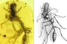 99-Year-Old Fossil Reveals Scary Details About 'Hell Ants' Which Used Headgear to Hunt