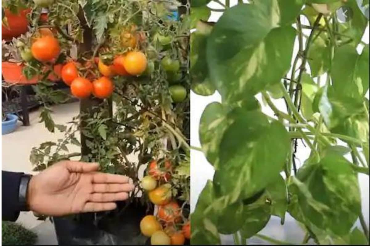 How to Create a Self-Sufficient Urban Farm At Your Home By Growing Your Own Organic Food