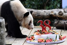 World's Oldest Captive Panda Celebrated Her 38th Birthday With a Customized Cake