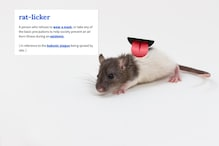 'Rat-Licker': The New Term For Covidiots Has a Reference to the Bubonic Plague