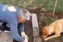 'Good Boy': Pet Dog Helps Man in Gardening in This Adorable Viral Video