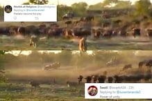 Herd of Feisty Buffaloes Chase Two Lions Away in Viral Video, Internet Hails the Power of Unity