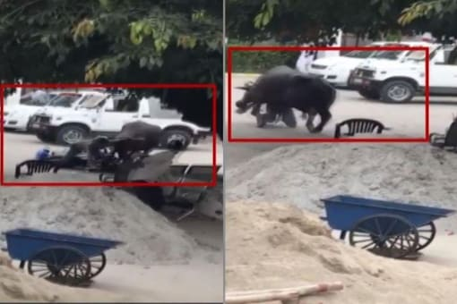 Video grab of a buffalo attacking police officer on bike in UP. (Credit: ANI)