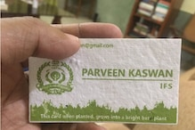This IFS Officer's Visiting Card Grows into a Bright Basil Plant