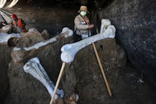 Mammoth Skeletons Found at Mexico Airport May Reveal What Caused Their Extinction