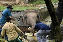 Pakistan's Only Asian Elephant Looks for New Home After Deplorable Conditions Revealed