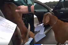 Watch: Goat Enters Police Patrol Car and Eats Paperwork, Video is Leaving the Internet in Splits