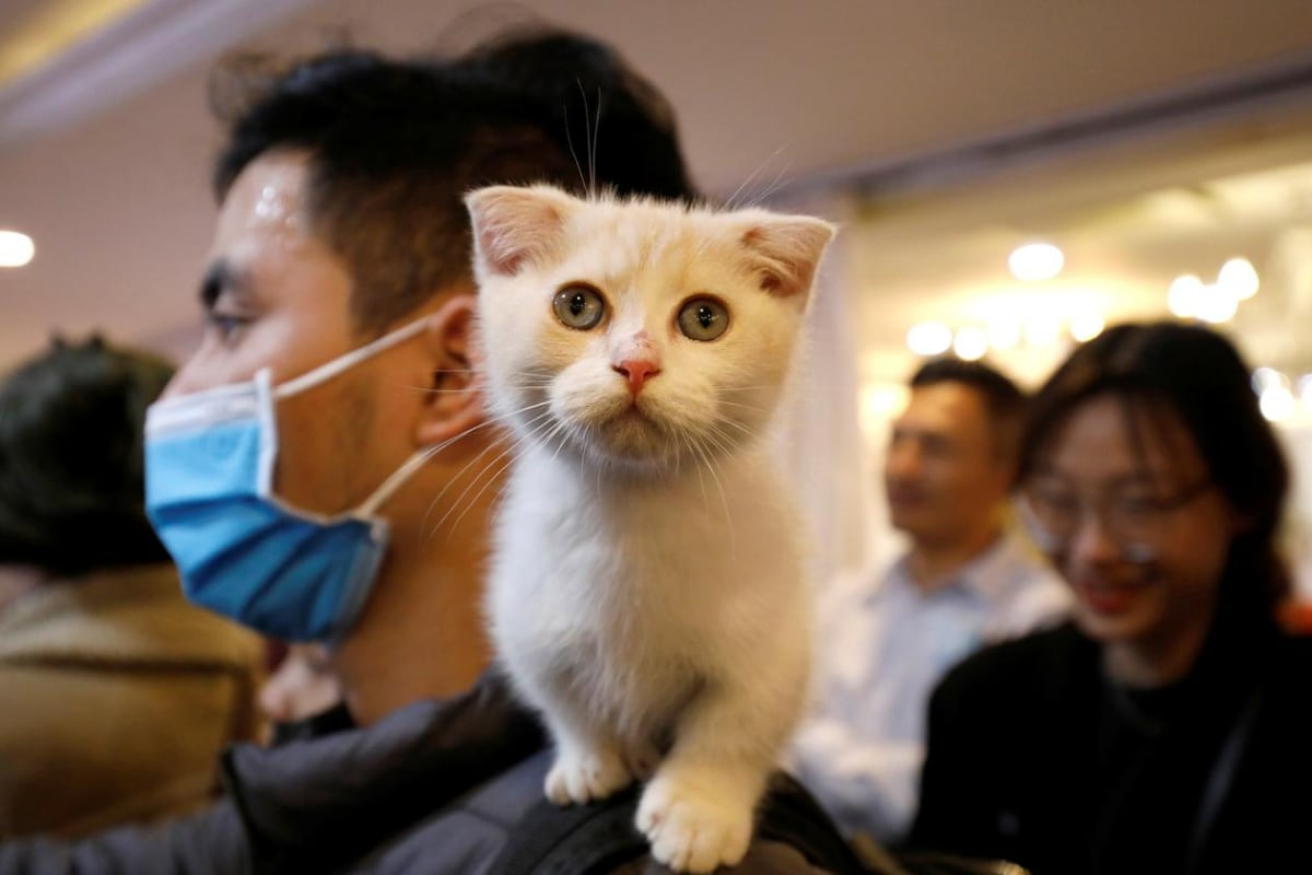 Feline Danger: Cats May Be Catching Coronavirus at Far Higher Rates than Anticipated