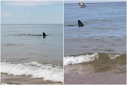 A great white shark was spotted swimming too close to the shore, giving beachgoers at Race Point Beach the surprise of their lives | Image credit: Facebook