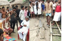 UP Villagers Rescue Crocodile, Demand Rs 50,000 Ransom from Officials to Release it