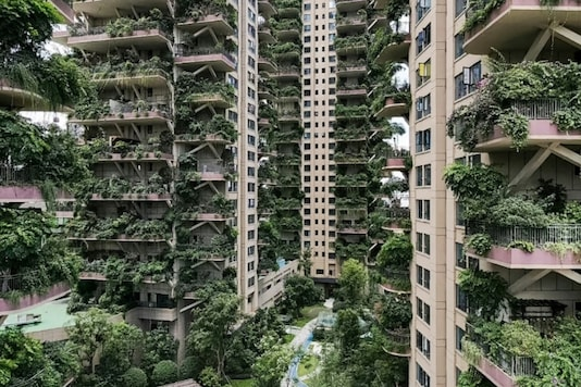 With hardly any residents to care for them, the plants at Chengdu's Qiyi City Forest Garden have overrun the towers STR - AFP.
