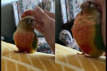 Watch: Bird Reacts to 'Pretend to Pat Your Pet' Challenge and It is Adorable