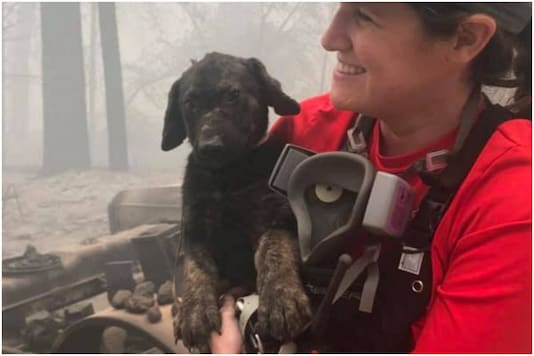 A puppy survived a massive wildfire in California | Image credit: Twitter