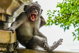 Comedy Wildlife Photography Awards: Top 44 Funniest Photographs