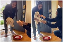 Viral Video of NRI Puppy's Aarti and Grihapravesh Triggers Debate about Brahmanical Casteism