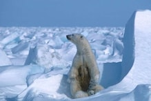 Summer Ice in Arctic Sea is the Second Lowest It's Ever Been on Record, Find Scientists
