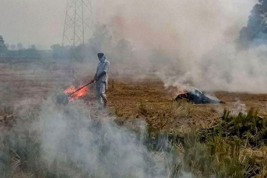 File photo of stubble burning.