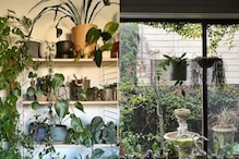 Love for Plants Makes Australian Architect Turn His City-home into a 'Mini Forest'