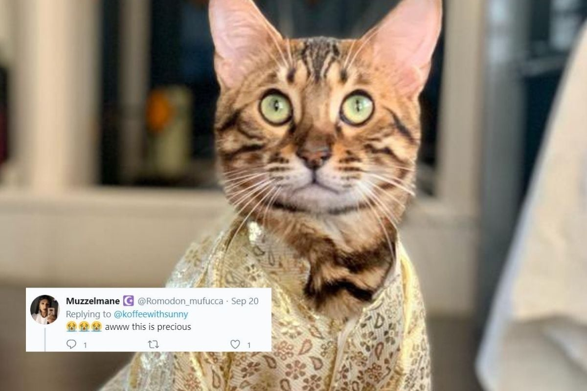Woman Stitches Sherwani for Her Cat in This Adorable Viral Image. Twitter is in Awe