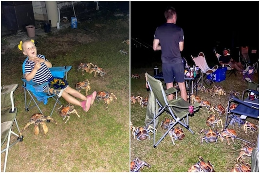 A sea of crabs attacked a family picnic in Australia | Image credit: Facebook