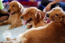 Finland Deploys Coronavirus-sniffing Dogs at Airport as a Cost-friendly Way to Detect Infection