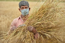 Not Just Weeding Out Hurdles in Agri Sector, Farm Reforms May Also Fulfill Global Requirement for Food